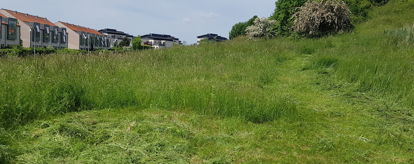 Slået cirkel i græsset. Fremtidig picnic-mulighed?